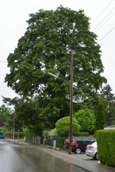 Bild des Baumes